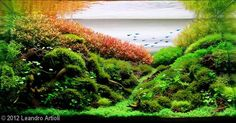 2012 AGA Aquascaping Contest First Place and Best of Show Aquatic Garden, 28L ~ 60L by Leandro Artioli, Brazil