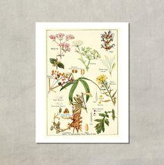 Marjoram Sage Mustard Plant Botanical Print door TwoDovesPrinting
