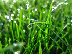 Cbus52: Columbus in a Year: Drops of Dew