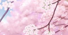 Pretty Sakura Branch.