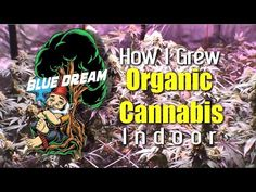 This Video depicts the cultivation of legal medical cannabis in the state of California. The cultivation of Cannabis may or not be legal in your state or cou. Medical Marijuana, Cannabis, Bob Marley Day, Skunk Weed, Ph Meter, Grow Tent, Earthworms, Grow Organic, Ganja