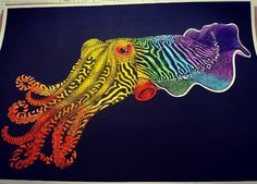Cuttlefish By Wendy Perry