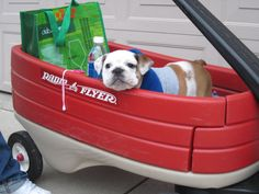 Groceries? Check. Water? Check. Cute puppy? Check! #CutePetsCa #dogs #cuteanimals
