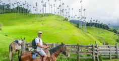 Vallée de Cocora à Salento, la verdoyante Colombie