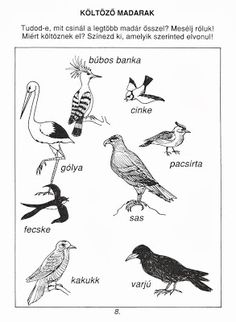 Picasa Webalbumok Nature Study, Bird Drawings, Toddler Preschool, Types Of Art, Primary School, Animals For Kids, Activities For Kids, Art For Kids, Coloring Pages