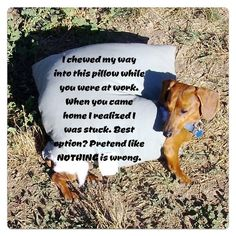The Worst Dogs on the Internet Get Shamed [Photos] : CollegeCandy – Life, Love & Style For The College Girl