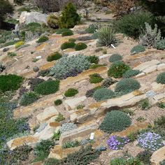 Crevice garden from the Denver Botanic Gardens: an interesting idea for the front yard or part of the pee garden.