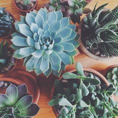 Indoor plants and cactus. An assortment of different house plants and foliage. Green rooms and rooms with potted plants. Cacti And Succulents, Planting Succulents, Cactus Plants, Planting Flowers, Potted Plants, Succulents Tumblr, Belle Plante, Plant Aesthetic, Plants Are Friends