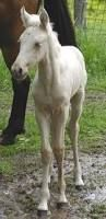Image result for white horse