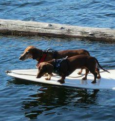 Surfing Weenies