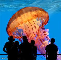 An Amazing Orange Colored Giant Jellyfish Beautiful Fish, Life Is Beautiful, Medusa, Giant Jellyfish, Jellyfish Pictures, Giant Fish, Jewel Of The Seas, Salt Water Fish, Underwater Life