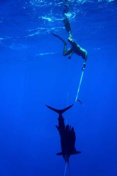 Spearfishing ☆.¸¸.•´¯`♥ pinned by http://www.wfpblogs.com/author/nicolerichards/ ♥´¯`•.¸¸.☆