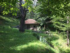 Macedonia, Trunks, Plants, Drift Wood, Tree Trunks, Plant, Fruit Salads, Planets