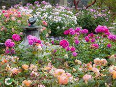Bodnant Gardens - Upper Rose Terrace