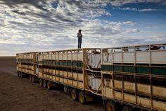 Brunette Downs cattle station