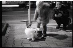 The Rabbit - null