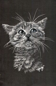 Kitten white pencil crayon