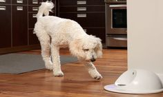 CleverPet: The First Game Console For Dogs