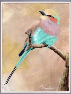 Caron ORIGINAL painting art signed bird Africa lilac roller animal wildlife  #Realism