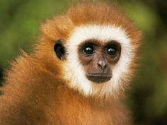 Monkeying around.....