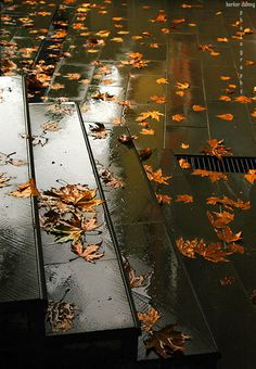 rain + autumn leaves #fall