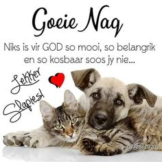 Good Night Blessings, Good Night Wishes, Good Night Sweet Dreams, Good Night Quotes, Day Wishes, Evening Greetings, Goeie Nag, Afrikaans Quotes, Special Quotes