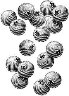 Stock Scratchboard Illustrations by Michael Halbert Illustration Botanique, Botanical Illustration, Watercolor Illustration, Engraving Illustration, Gravure Photo, Scratchboard, Stock Art, Ink Illustrations, Corporate Design