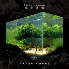 Green Morning von Harry Kwong #aquascaping