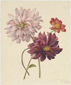Dahlia's, Willem Hekking (I), Willem Hekking (jr), 1806 - 1862