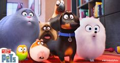 Here's a movie for all pet parents to watch. Have you seen it yet? #secretlifeofpets - http://www.entirelypets.com/the-secret-life-of-pets.html?utm_source=twitter&utm_medium=web&utm_campaign=eptwpostarticle