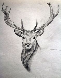 Deer tattoos are loved by many people. In terms of placement, animal tattoos could be inked on the back, chest, limbs, etc. Here are a few realistic deer tattoo designs worth considering. Art Drawings Sketches, Easy Drawings, Tattoo Drawings, Art Sketches, Sketch Drawing, Drawing Ideas, Drawing Art, Sketching, Deer Drawing Easy