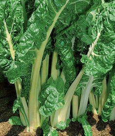 #SwissChard Seeds #Heirloom #Fordhook Giant Non GMO