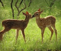 Beautiful Creatures, Animals Beautiful, Bambi, Goblin, Cute Baby Animals, Cute Babies, Drawings, All Gods Creatures, Aesthetics