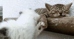 Wake up, buddy...