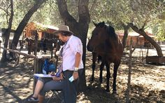 A ranch horse offers advice to the artists!