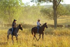 Mustering cattle near Eidsvold, Queensland - Andrew McInnes. Find more authentic Australian stock images at Austockphoto Australia Photos, Queensland Australia, Western Australia, Australia Travel, Australian Sheep, Australian Photography, Sheep Farm, Country Scenes, Ranch Life