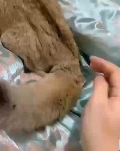 Funny Animal Memes, Funny Cat Videos, Cute Funny Animals, Cute Baby Animals, Funny Cats, Cute Cats And Kittens, I Love Cats, Kittens Cutest, Ragdoll Kittens