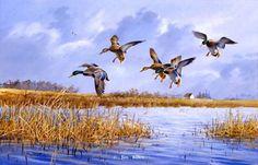 Waterfowl Paintings by Jim Killen 22