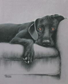Jasper Drawing  - Jasper Fine Art Print Selected by drawDOGS.com artist Stephen Kline for an ongoing exhibition of Pinterest dog art.