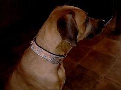 Individuelle Halsbänder nach Kundenwünschen und Fotos. Dogs, Animals, Animales, Animaux, Pet Dogs, Doggies, Animal, Animais