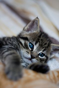 Mánis Kittens by afflaf, via Flickr