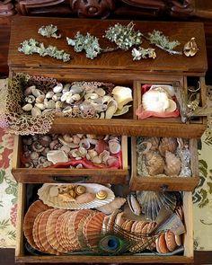Ocean treasures...