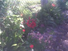More from my courtyard