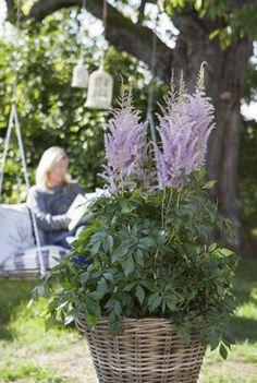 Astilbe, Scandinavian Style, Garden, Plants, Inspiration, Pink, Biblical Inspiration, Garten, Gardens