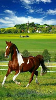 Share your photos and enjoy! Types Of Horses, Horses And Dogs, Cute Horses, Horse Love, Wild Horses, Animals And Pets, Cute Animals, Most Beautiful Horses, All The Pretty Horses
