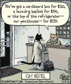 LOL ~ cats