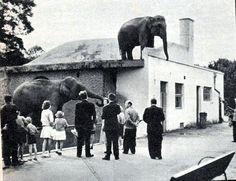 Hravé: Návštěvníci zoo pozorovat sloní stojící na střeše jedné z budov