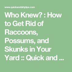 How to keep skunks away from your house and yard around - How to get rid of possums in the garden ...