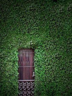 garden door - anon