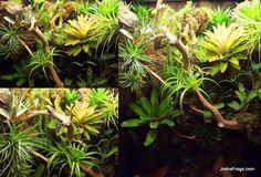 abronia vivarium montage